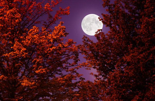 満月のインスピレーション
